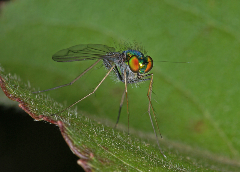 Lake eaton as well Insects likewise E2e812ab3 furthermore 530 further Full. on incidental